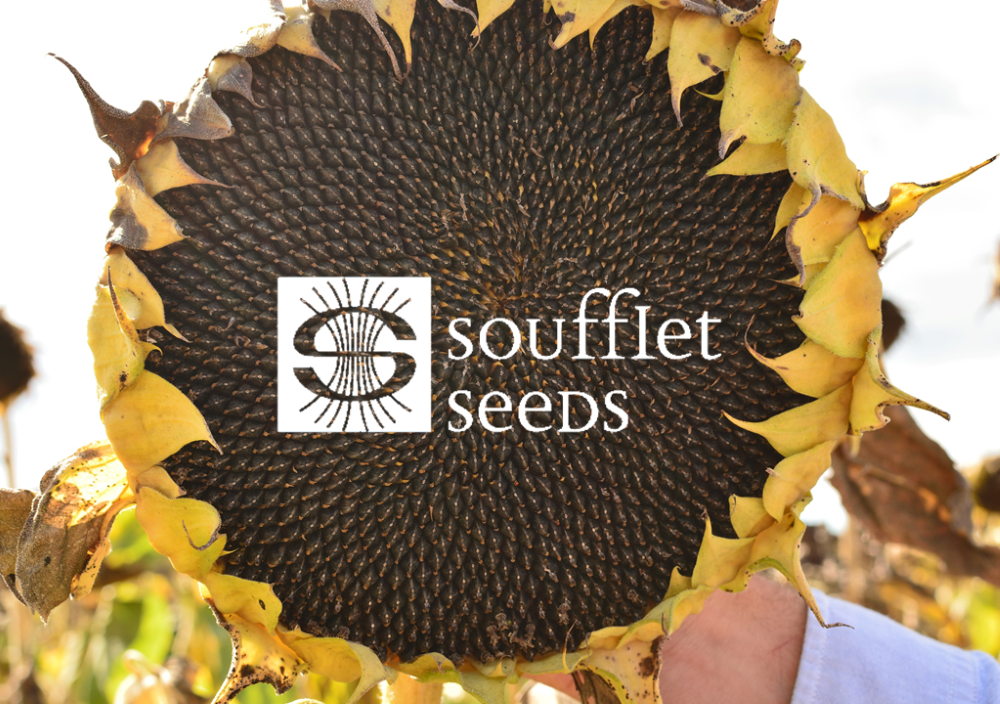 Visiting production of Soufflet Seeds in Soufflet Agro Romania
